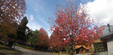 árvores em maio