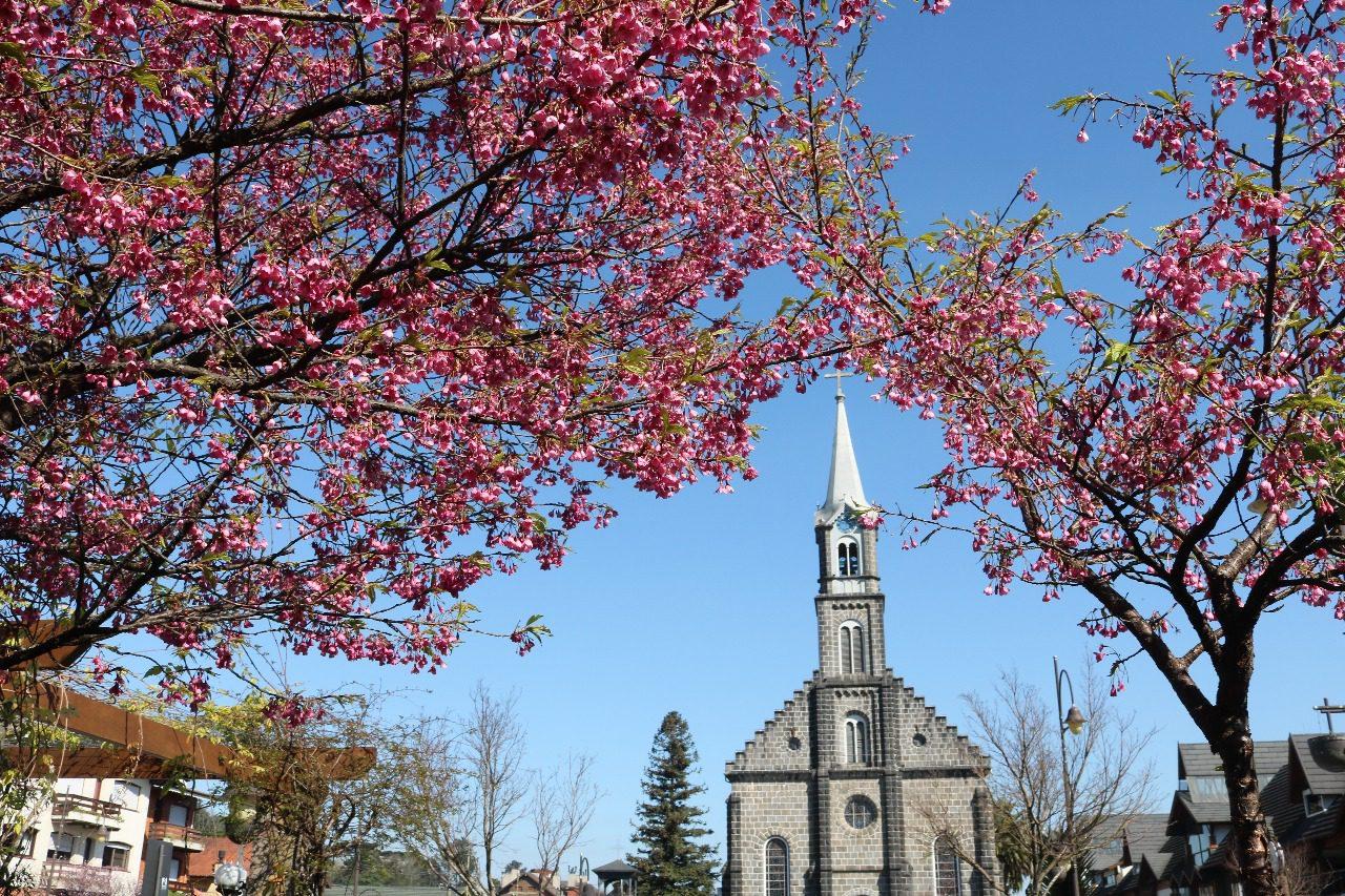 Flores colorem a cidade na primavera