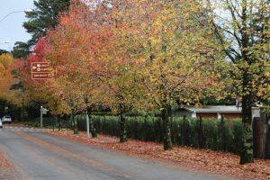 qual melhor época de visitar gramado outono. Rua João alfredo schneider em um dia de outono com suas arvores com as folhas começando a cair e num tom alaranjado.