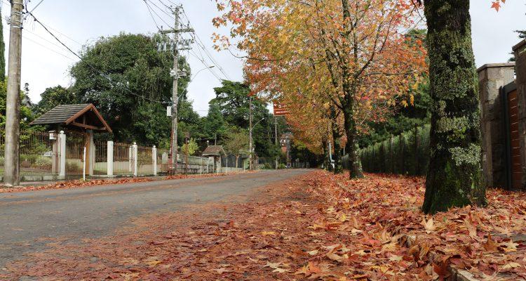 Concurso público prefeitura de Gramado 2018. Rua de Gramado no outono com muitas folhas de plátanos no chão